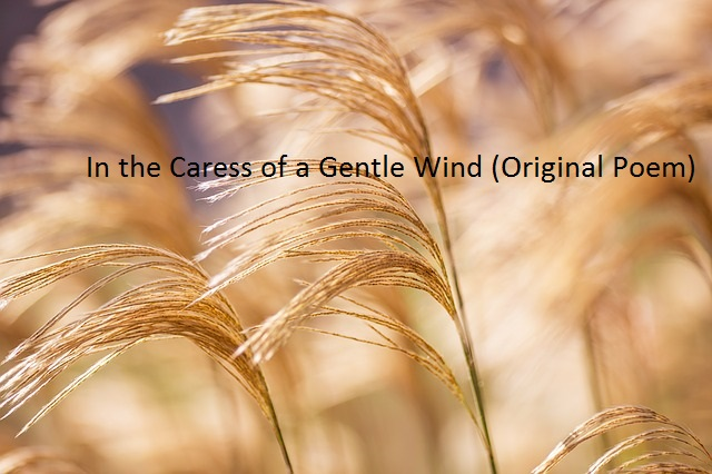 In the Caress of a Gentle Wind