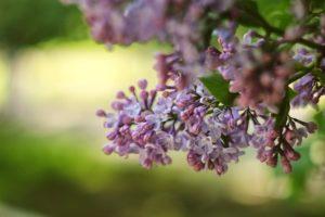 Flower in life