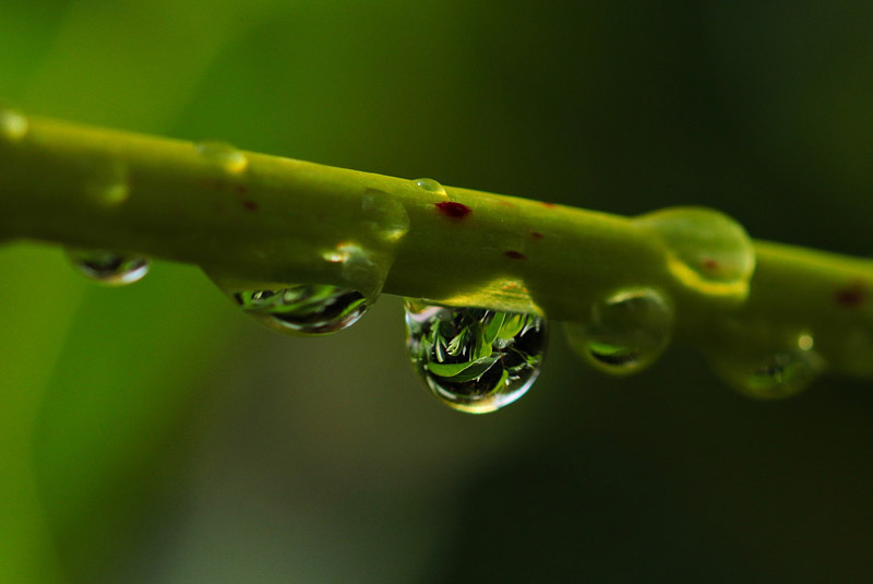 Dewdrops of a Watcher