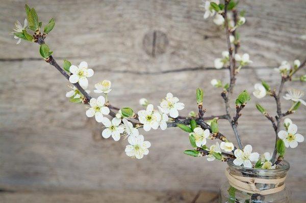 How the blossoms teach meditation